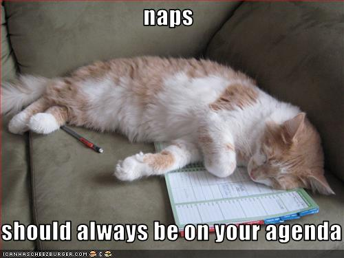 funny-pictures-cat-has-naps-on-his-agenda1