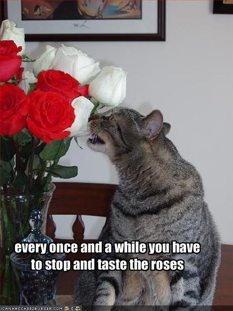 funny-pictures-cat-stops-to-taste-the-roses1