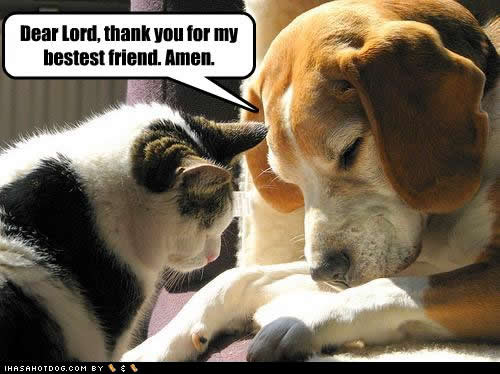funny-dog-pictures-dear-lord